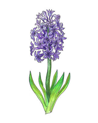 Hyacinths Wall Art - Painting - Hyacinth Flower Botanical Watercolor by Irina Sztukowski