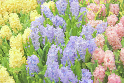 Photograph - Hyacinth Flowers In The Spring Garden by Jennie Marie Schell