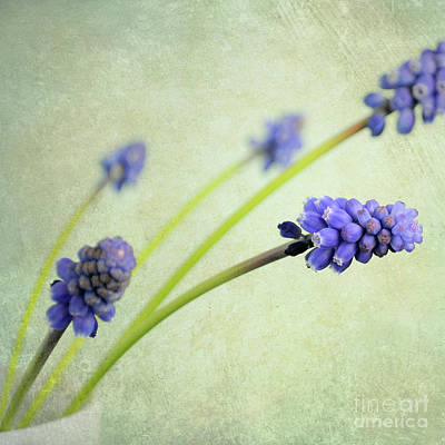 Hyacinth Grape Art Print by Lyn Randle
