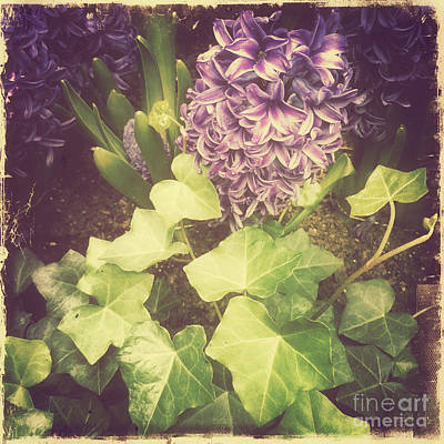 Photograph - Hyacinth Happiness - Nostalgia Of Spring 2 by Miriam Danar