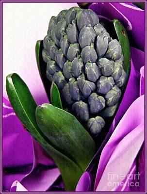 Photograph - Hyacinth In Purple Wrap by Sarah Loft