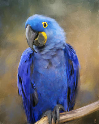 Macaw Painting - Hyacinth Macaw  by Jai Johnson