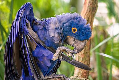 Friendly Digital Art - Hyacinth Macaw by Rob Sellers