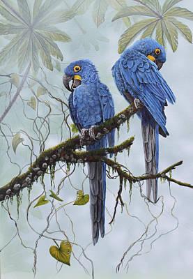 Hyacinth Macaws Art Print