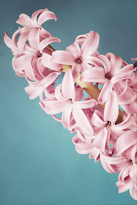 Photograph - Hyacinth by Martin Capek