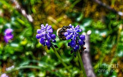 Photograph - Hyacinth With Company by Paul Mashburn