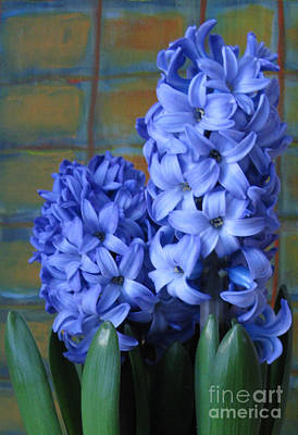 Art Print featuring the photograph Hyacinths by Patricia Januszkiewicz