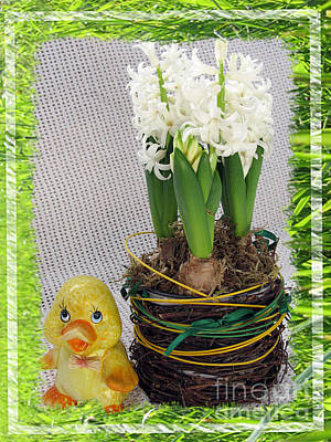 Photograph - Hyacinthus And The Duckling Greeting Card by Ausra Huntington nee Paulauskaite