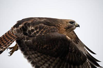 Hybrid Hawk Flyby  Art Print