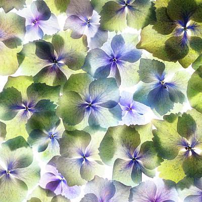 Photograph - Hydrangae Squared by Rebecca Cozart