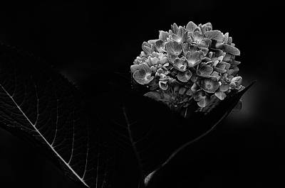Photograph - Hydrangea  -  Black And White by Susan McMenamin