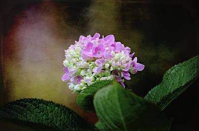 Photograph - Hydrangea 1 by Susan McMenamin