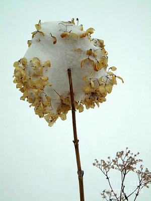 Photograph - Hydrangea Blossom In Snow by Susan Lafleur