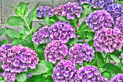 Photograph - Hydrangea Bush by Renee Marie Martinez