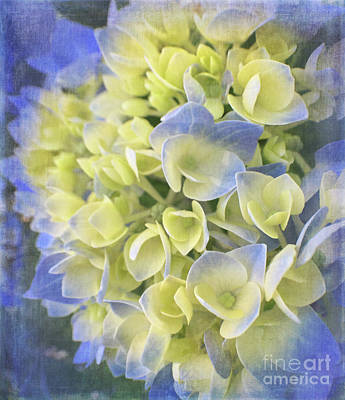 Photograph - Hydrangea by Cathy Alba