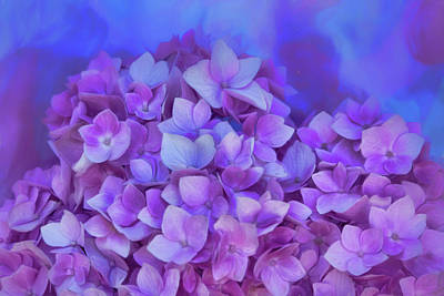 Photograph - Hydrangea - Dreams by Nikolyn McDonald