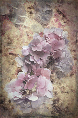 Photograph - Hydrangea Emerging by Debbie Smith
