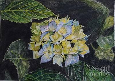 Drawing - Hydrangea by Gita Vasa