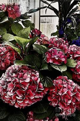 Hydrangea Greenhouse Original by Marsha Heiken