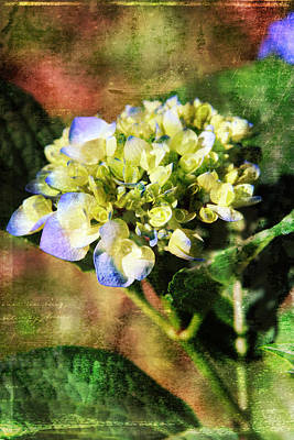 Digital Art - Hydrangea by Gwen Vann-Horn