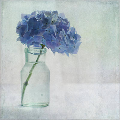 Single Flower Photograph - Hydrangea by Jill Ferry