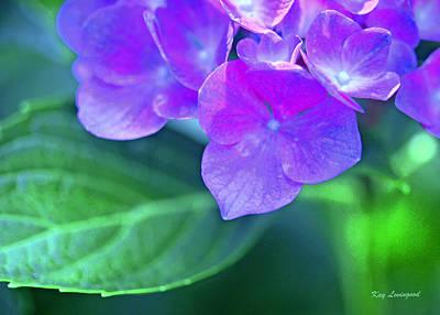 Photograph - Hydrangea by Kay Lovingood