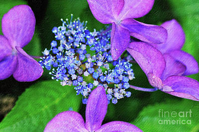 Purple Hydrangeas Photograph - Hydrangea by Kaye Menner