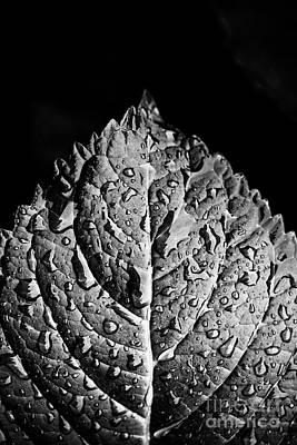 Photograph - Hydrangea Leaf - Bw by Scott Pellegrin