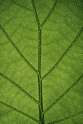 Hydrangea Leaf Art Print by Steve Gadomski