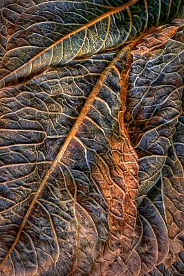 Photograph - Hydrangea Leaves - Left by Nikolyn McDonald