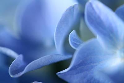 Photograph - Hydrangea Lisp by Don Ziegler