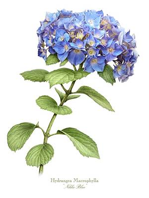Painting - Hydrangea Nikko Blue by Artellus Artworks