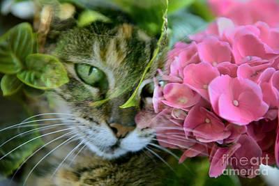 Photograph - Hydrangea by Olga Hamilton