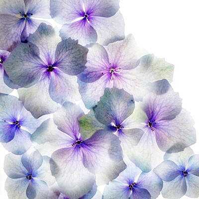 Photograph - Hydrangea On The Side by Rebecca Cozart