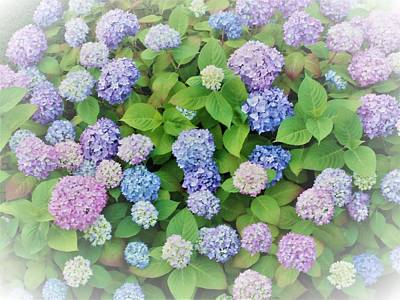 Hydrangea Play Art Print by Ann Johndro-Collins