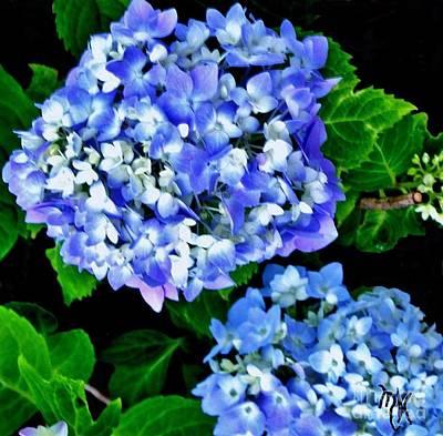 Hydrangea Pretty Purple Original by Marsha Heiken
