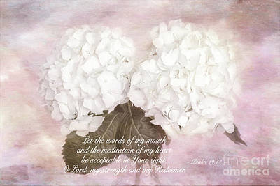 Photograph - Hydrangea Psalm 19 by Sharon McConnell