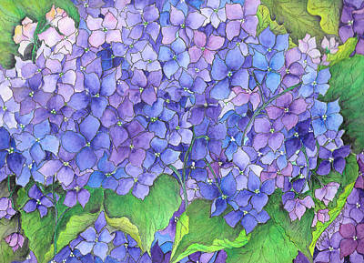 Painting - Hydrangea Purple Blue by Meldra Driscoll