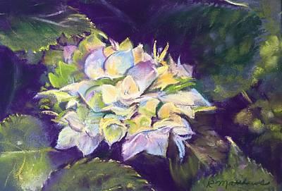 Pastel - Hydrangea by Rebecca Matthews