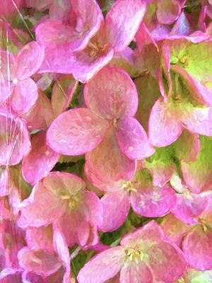 Photograph - Hydrangea Summer by Kathy Bassett