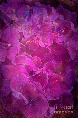Digital Art - Hydrangea Textured In A Pink Light by Joy Watson