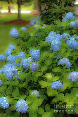 Photograph - Hydrangea Trail by Dale Powell