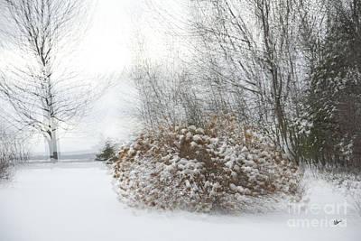 Photograph - Hydrangea Winter by Alana Ranney