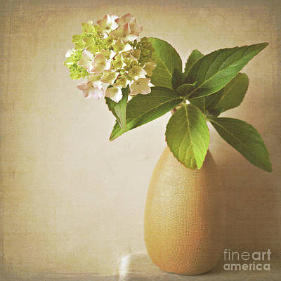Hydrangea With Leaves Art Print