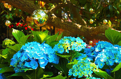 Photograph - Hydrangeas At Utica Square by Susan Vineyard