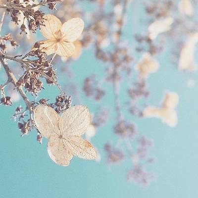 Photograph - #hydrangeas #becauseiamhappy #flowers by Tricia Elliott