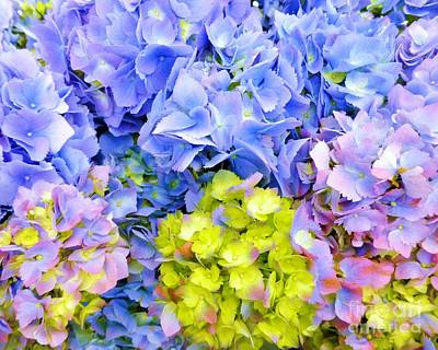 Photograph - Hydrangeas En Masse by Barbie Corbett-Newmin