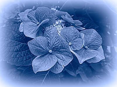 Photograph - Hydrangeas In Blue by Susan Lafleur