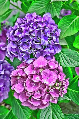 Photograph - Hydrangeas One by Renee Marie Martinez