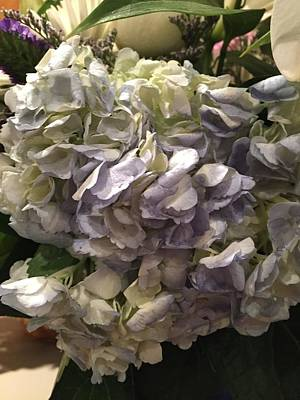 Photograph - Hydrangeas by Shawn Hughes